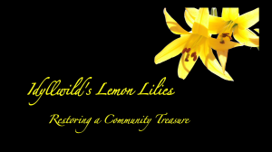 Idyllwild's Lemon Lilies - Restoring a Community Treasure still frame