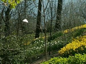 Light in Garden